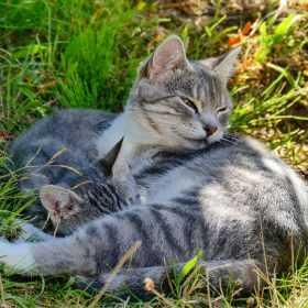 Katzen auf Usedom