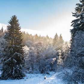 Winter im Harz