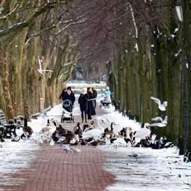 Winter in Tegel