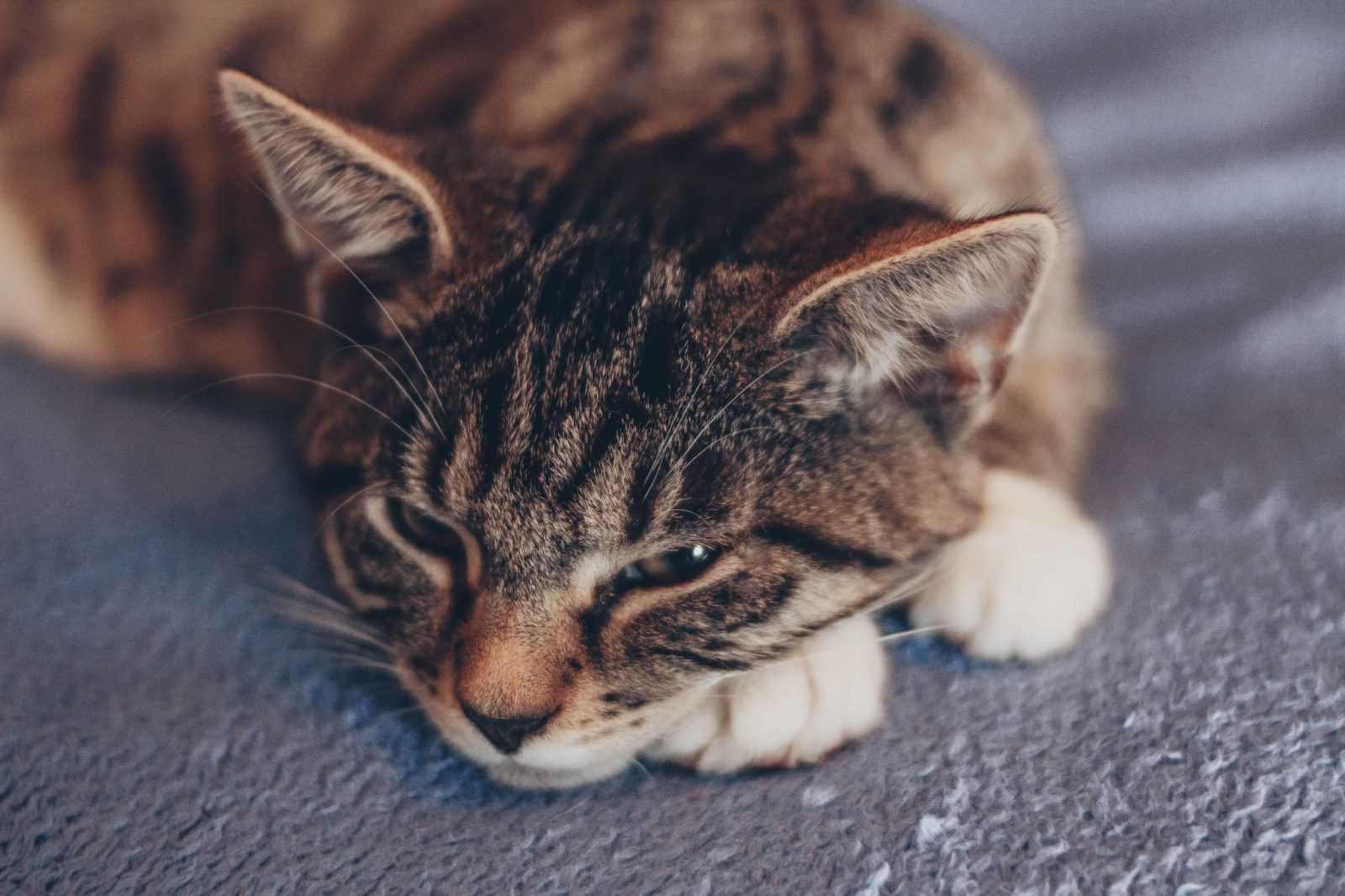 Katzen im Fokus